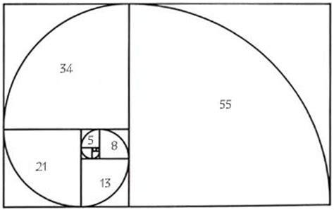 pattern in nature quiz g 233 om 233 trie sacr 233 e le nombre d or rennes le ch 226 teau archive