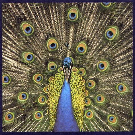 Cd The Bluetones Science the bluetones fanart fanart tv