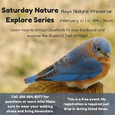 attracting bluebirds to your backyard nature explore saturday series attracting bluebirds