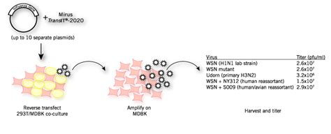 Bench Plaque Co Transfection Protocol For Multiple Plasmid Dnas