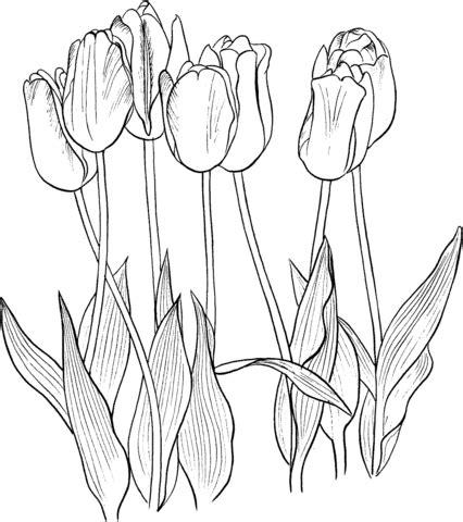 Ausmalbild Sieben Tulpen  Ausmalbilder Kostenlos Zum Ausdrucken sketch template