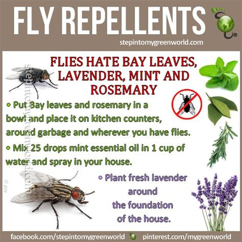 Home Remedy Mosquito Repellent by 25 Best Ideas About Fly Remedies On