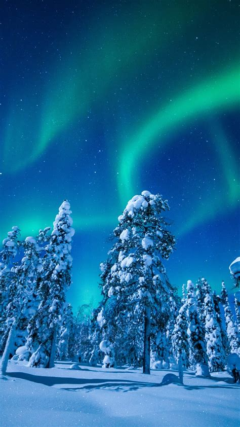 wallpaper forest winter frosted trees aurora borealis