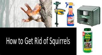 how to get rid of squirrels top 6 repellents and traps