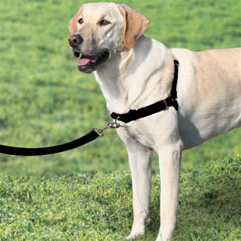 gentle leader harness no pull harnesses for all dogs that pet place