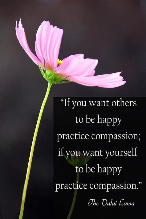 from heaven practicing compassion for yourself and others books quotes about compassion dalai lama quotesgram