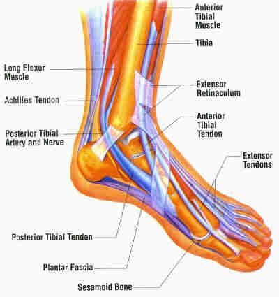 foot diagram strengthen your muscles krave fit magazine the