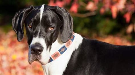 low maintenance breeds low maintenance breeds pets