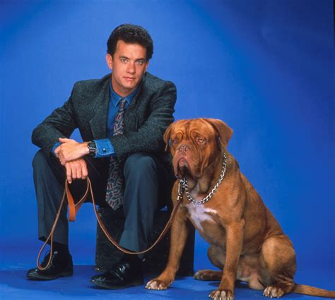what of is turner and hooch tom hanks images turner hooch hd wallpaper and background photos 34677733