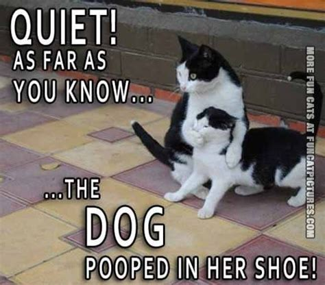 How To Stop A Cat From Pooping On The Floor by The Pooped In Shoes Cat Pictures