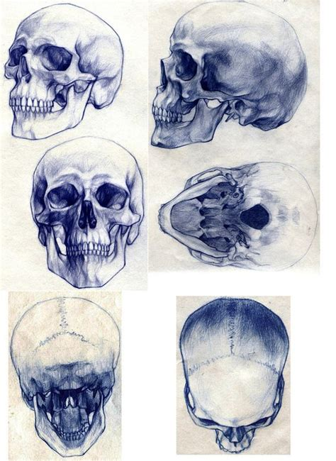 25 best ideas about skull drawings on pinterest smoke