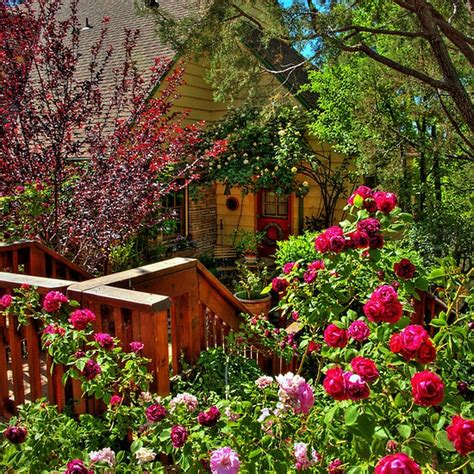 cottage rose garden cottagerosegarden pinterest