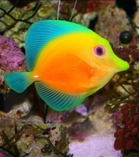 color fish 25 best ideas about fish on cool fish