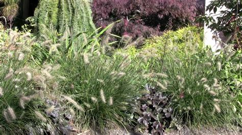 Ornamental Grass Garden Design Youtube Grass Garden Design