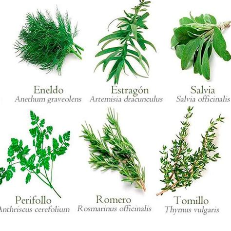 plantas medicinales argentina salud natural and natural remedies