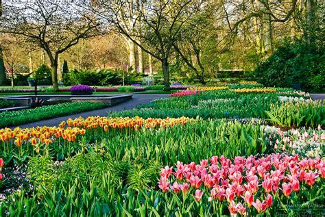 tulip flower garden keukenhof tulip gardens lisse the netherlands alison cornford matheson