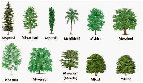 tree types swahili land aina za miti types of trees