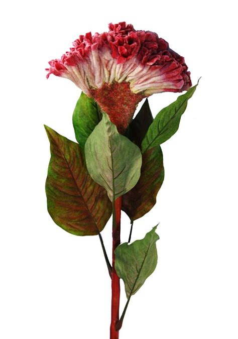 fiori riccione fiore tropicale celosia gigante fior di loto riccione