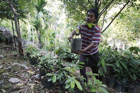 Minyak Nilam Sumut rajin dirambah kondisi tngl wilayah aceh mulai merana