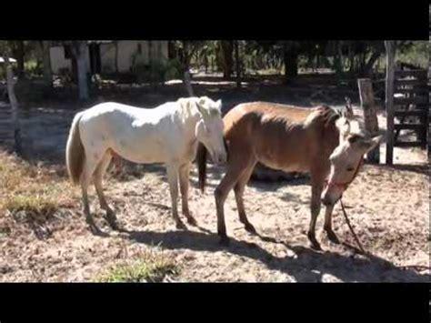 Animal Matting horses mating animal animal mating pictures