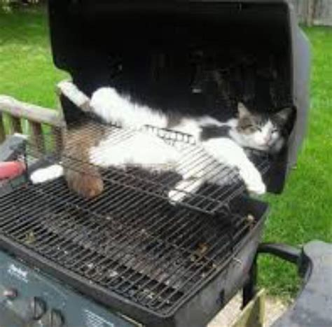 Cat On by Cat In Bbq Archives Cats On Things