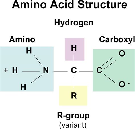 3 proteins in the plant sources of protein building blocks amino acids