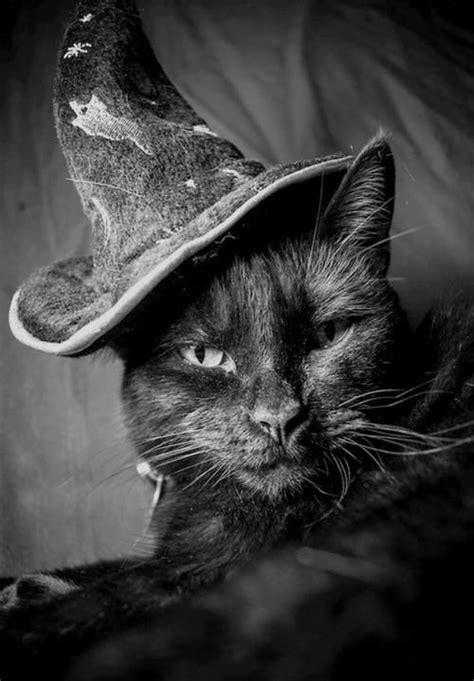 wizard cat wizard cat boo gobble gobble fall ya ll
