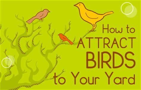 how to attract wildlife to your backyard how to attract birds to your yard at menards