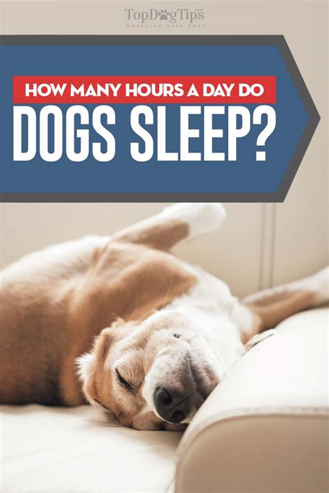how many hours does a puppy sleep why do dogs sleep so much how many hours a day do dogs sleep
