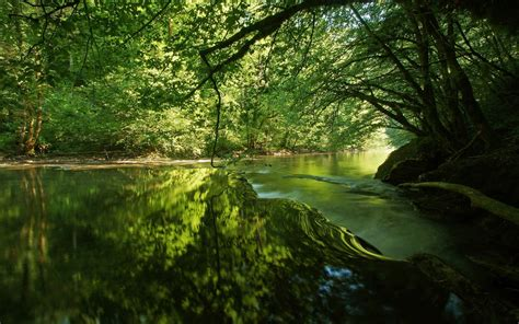 landscape plants river trees reflection wallpapers hd