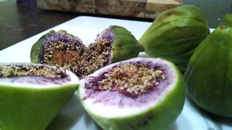 why is my fig tree not producing fruit fruit trees why are my figs inside and not ripening
