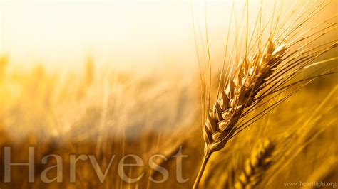 harvest background quot harvest quot powerpoint background of matthew 9 37 38 box