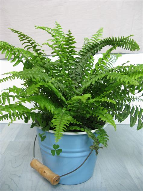 top ten house plants to help you breathe easy at home shanghai mamas