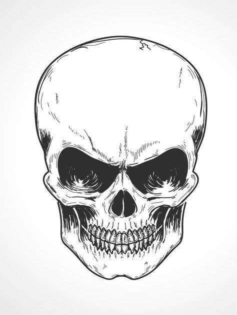53 best Skull reference images on Pinterest | Skull