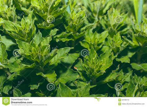 green foliage outdoor plants green plants in garden stock photo image 64189113