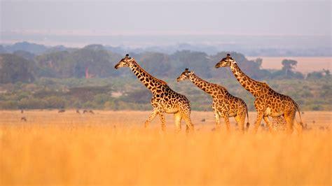 africa san diego zoo animals plants