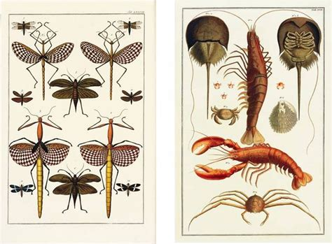 seba cabinet of natural 3836554372 15 best images about cabinet of natural curiosities on cabinet of curiosities
