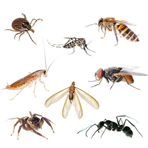 Small Indoor Flying Insects How To Identify Indoor Insects