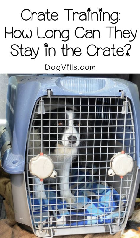 leaving puppy in crate while at work how can you leave a in a crate during the day dogvills