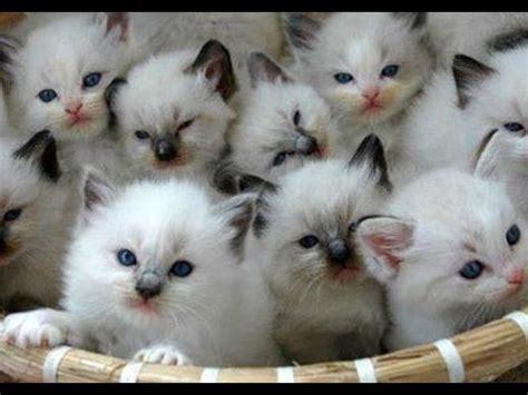 The most beautiful cats in the world,,,i Gatti più belli