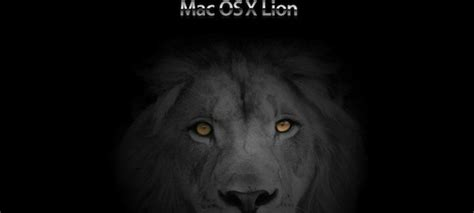 imagenes leon negro leon negro wallpaper imagui