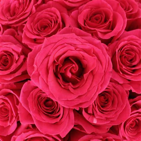 Floy Fuschia queenberry pink