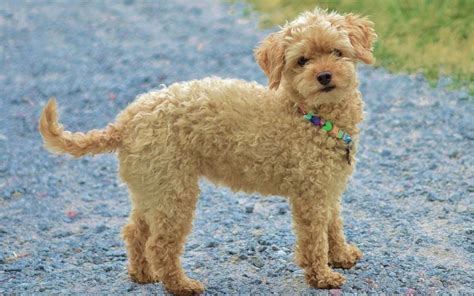 what can i give my for fever pancreatitis in dogs symptoms causes more canna pet