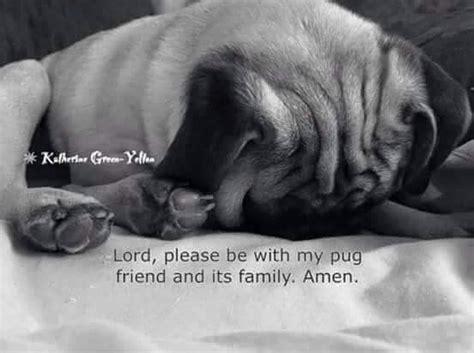 god pugs pug prayers dear god prayer pug and prayer