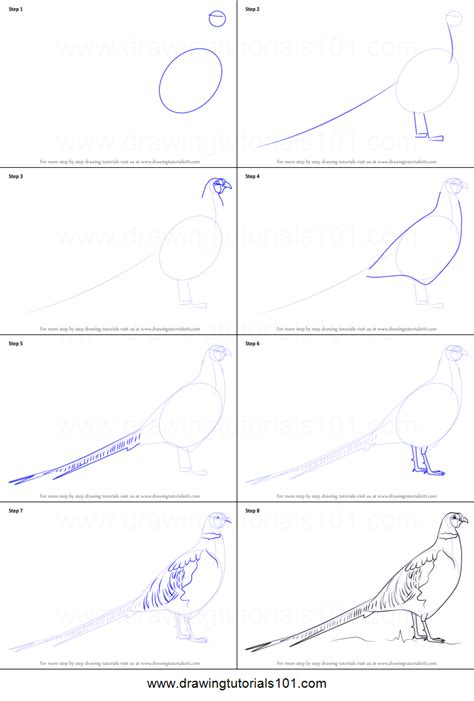 how to draw how to draw a common pheasant printable step by step drawing sheet