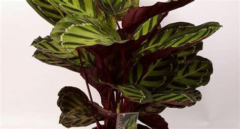 piante da interno piante interno piante appartamento piante interno