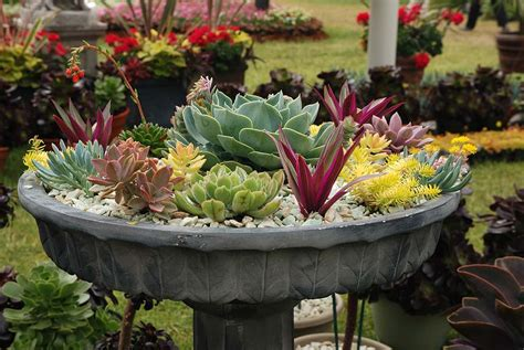 Rock Garden With Potted Plants Container Gardening Ideas Corner