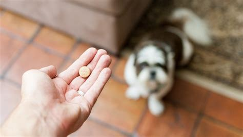 valium dosage for dogs diazepam for dogs uses dosage and side effects dogtime
