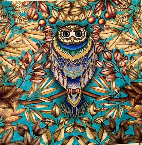secret garden coloring book owl всякое разное еще книжное