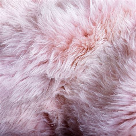 Merino Sheepskin Rug by Pink Sheepskin Rug Merino Hides Of Excellence